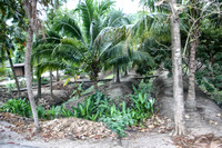 A visit to a Coconut Plantation and home