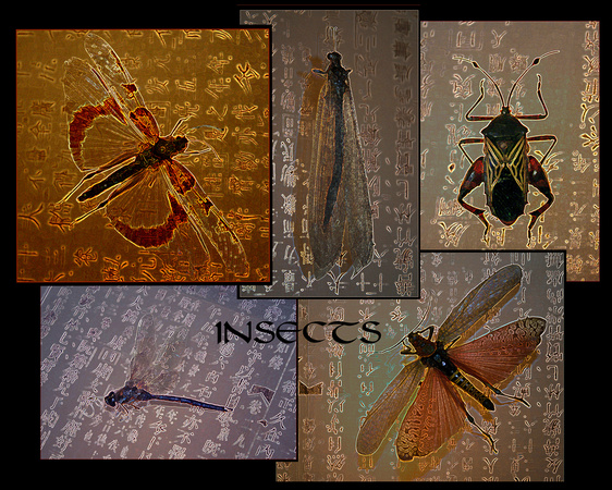 Insects l from the Insects Series